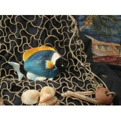 Pesce Angelo Blu