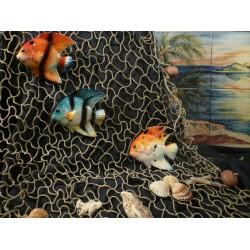 Pesce Arusetta