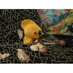 Pesce Holacantus