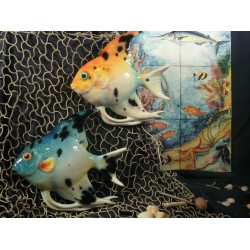 Pesce Pomacantus
